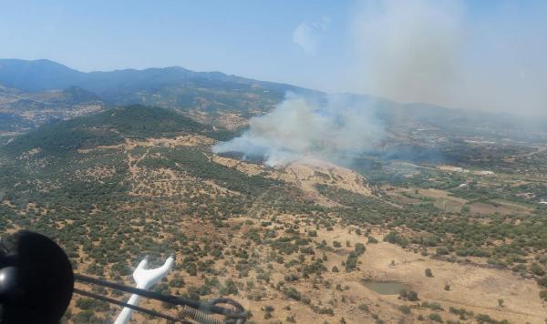 Son dakika haberi: İzmir'de makilik ve zeytinlik alanda yangın