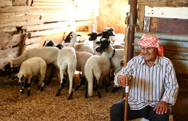ÜRETİMDEN İHRACATA TARIM – Sakız koyunu yetiştiriciliğe adanmış bir ömür: Ekrem Çelik