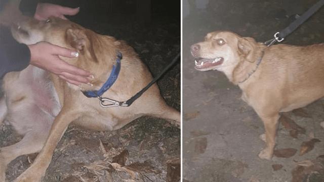 Pronađen Žile, pas tragično nastradale Marije Čajetinac iz Trstenika!
