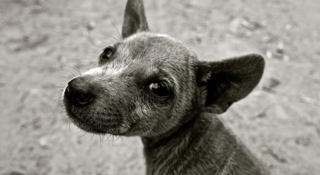 Više od 30 miliona pasa godišnje se ubije u Aziji za ljudsku ishranu