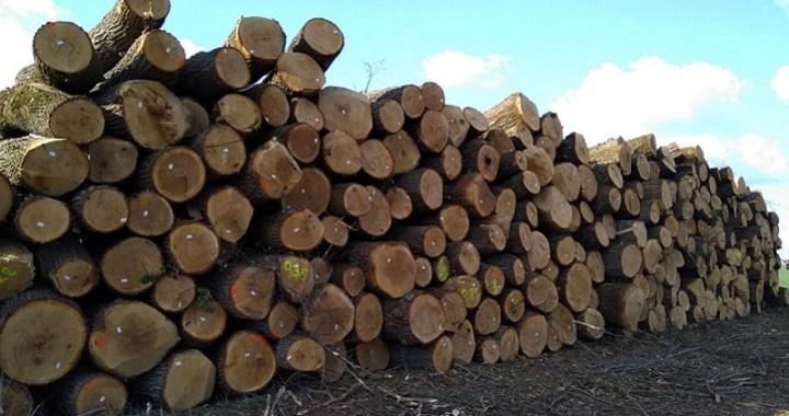 Hektari šume posečeni u Beogradu! Građani u strahu od zagađenja koje proizvodi Termoelektrana  u Obrenovcu