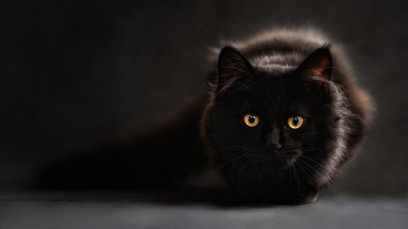 Da li su mačke vidovite?