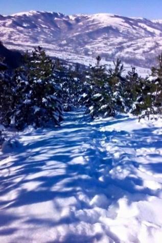 Snežni obronci nad Gotovušom