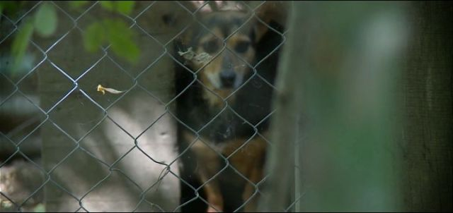 Više od stotinu životinja iz azila kod Novog Sada čeka udomljenje, nakon smrti čoveka koji se o njima brinuo