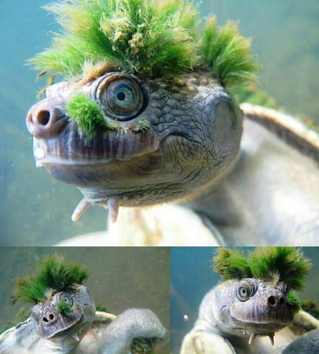 mary-river-kaplumbagasi