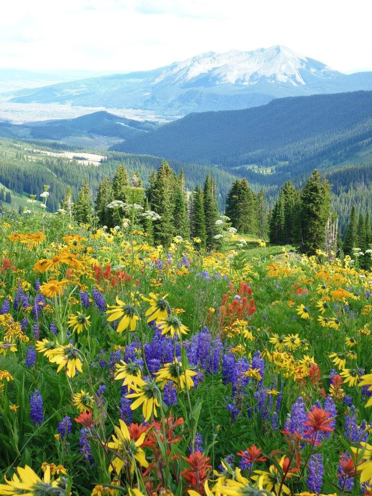 wildflowers crested butte