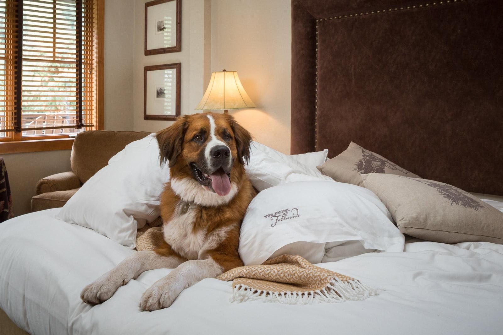 dog friendly, pet friendly hotel, hotel telluride