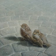 """""""Fledgling Sparrows"""" 10"""" X 10"""" Oil on Hardboard, price on request."""