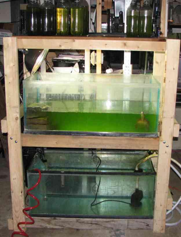 Green water tank rack