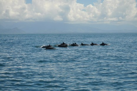 dolphins-south-pacific-costa-rica
