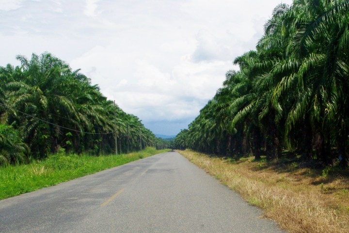 Way to Sierpe - Costa Rica - Photo by Dagmar Reinhard, Sierpe de Osa - Palmar , Pacifico Sur Costa Rica - Ballena Tales Magazine