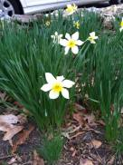 Spring Time in Fuquay-Varina