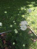 Summer garden at the Ballentine-Spence House