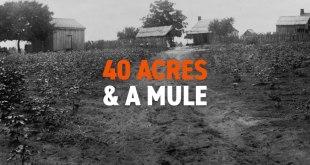 40 acres & a mule