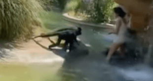 Texas woman jumps into monkey exhibit. - Captured footage from witness