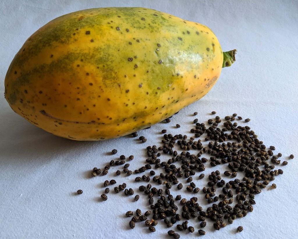 Papaya Kerne - Gesundheitstipp