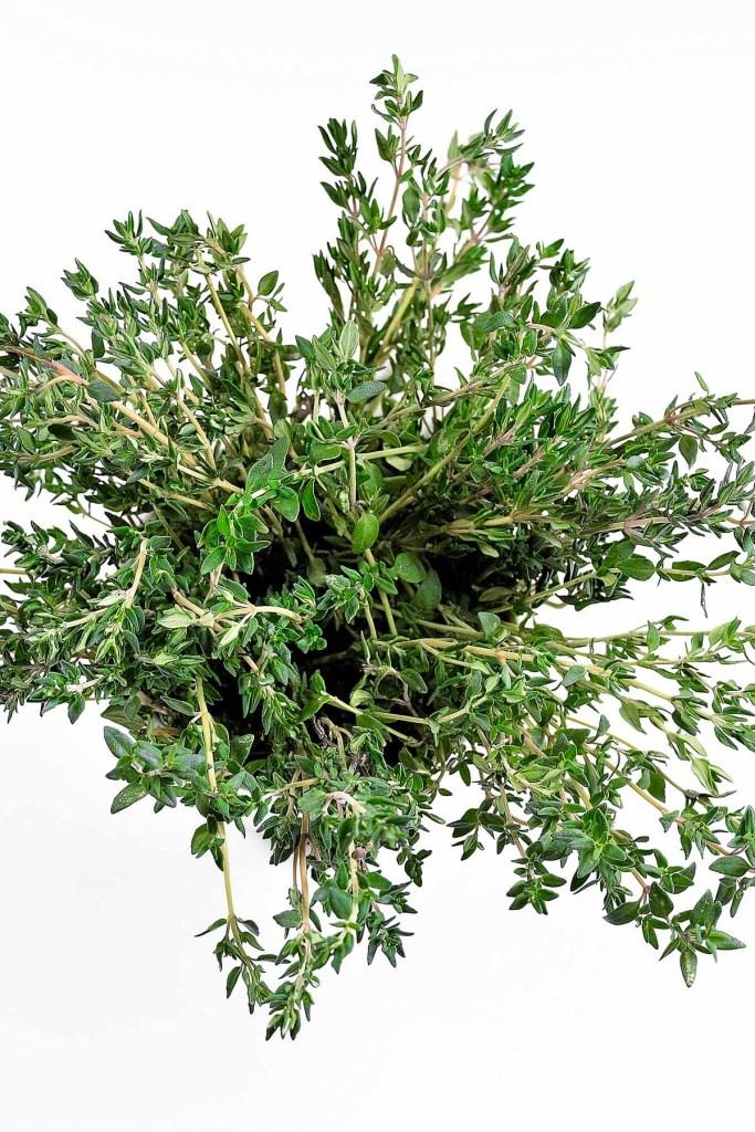 Thymianpflanze-Heilpflanze-ballesworld