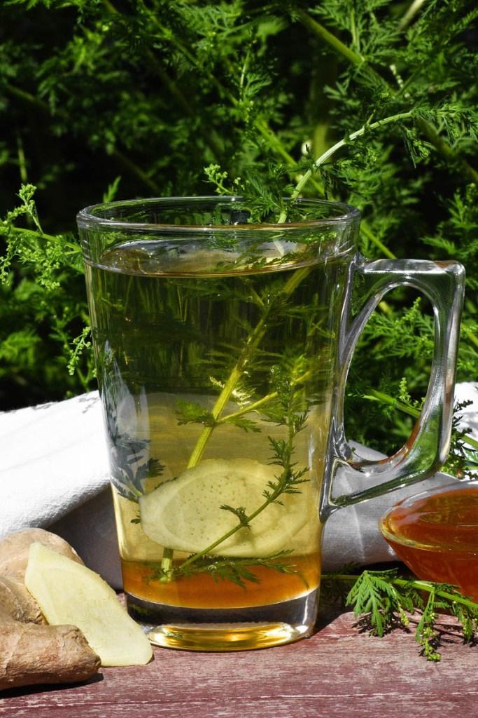 Beifuß-Ingwer-Honig Tee-Gesund-ballesworld