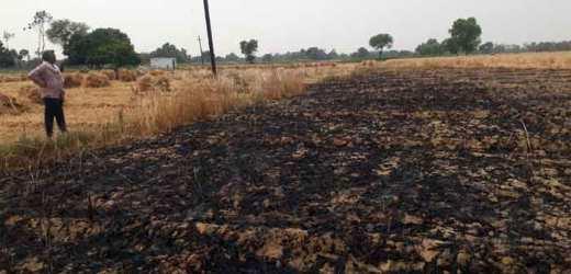 एक दर्जन किसानों का पांच बीघा खेत के गेहूं की फसल जलकर खाक