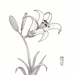Day Lily - #Inktober 22