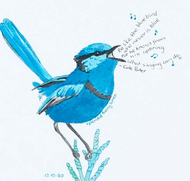 Splendid Fairy Wren - Be like the bluebird - #Inktober2020 Day 17 - Helen Lock