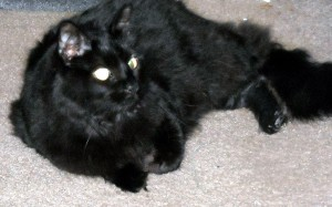 Although he could be moody and liked to bite my nose to wake me up each morning, my dearly departed black cat, Lucky, was mostly a sweetheart and was certainly nothing to be superstitious of. Photo R. Anderson