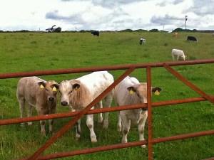 farms in Ballyyahoo