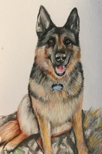 colour portrait of a German Shepherd illustrating a page from a children's stories website.