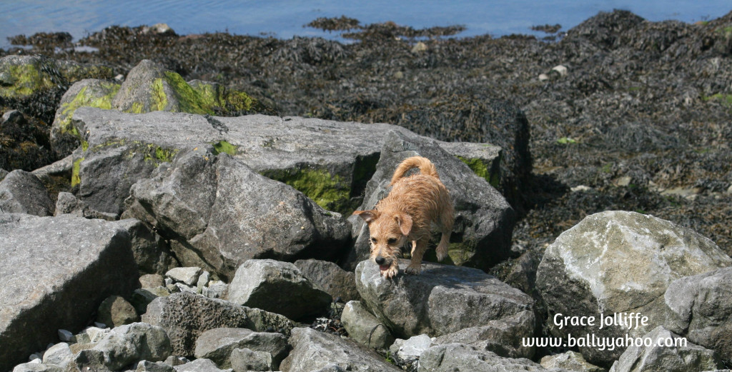 little dog on rocks Suddenly Rosie and Eppie saw something they liked and decided to make a run towards it.