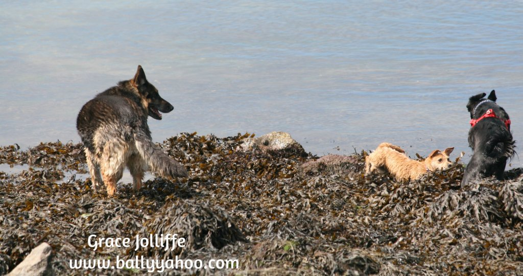 three dogs playing in seaweed illustrating children's story about dog