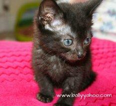 one-black-kitten