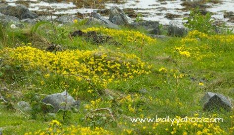rocky-meadow