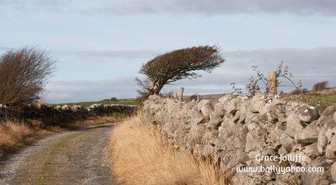 bent-tree-on-the-Wild-Atlantic-Way