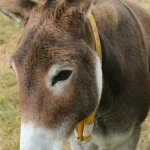 brown donkey illustrating stories about the creatures of Ireland's magical town of Ballyyahoo