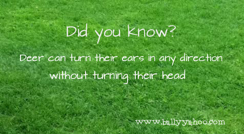 green grass with an interesting fact about Irish Deer