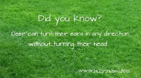 green grass with interesting fact about Irish Deer