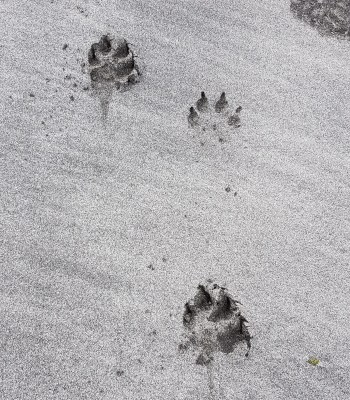 Dogs welcome - here on Staffin Beach