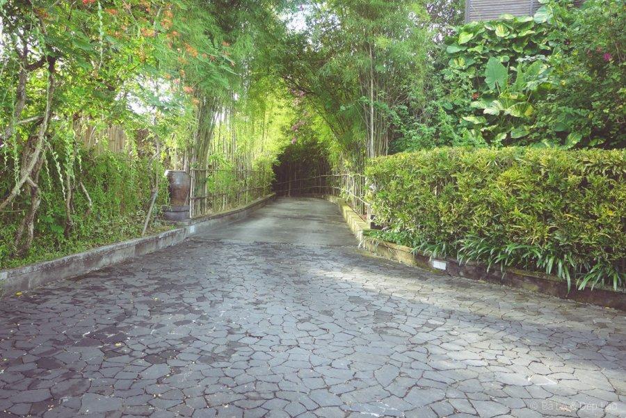 Con đường xanh mát bên trong The Hill Villas Hotel