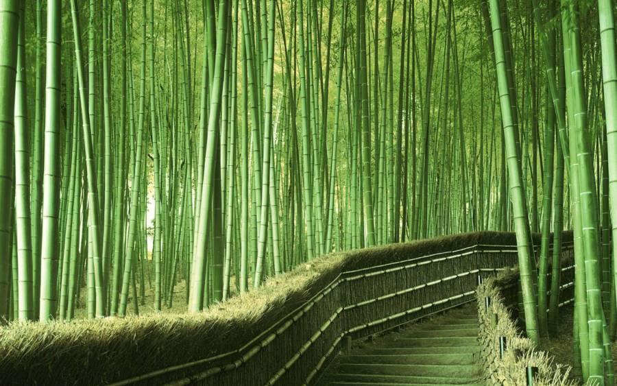 Rừng tre Sagano ( Arashiyama Bamboo Grove) theo quảng cáo đại trà :))