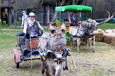 "Donkey races at the agro-tourism facility ""Garadzenski maentak Karobchytsy"""