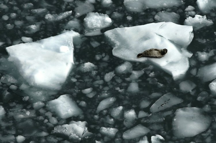 An alarming scenario for the Baltic Sea - Global temperature increases!