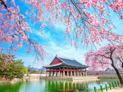 Korean Spring