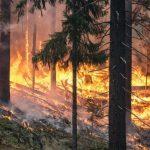 В волости Ания загорелся лес: длина кромки пожара — почти 1 км