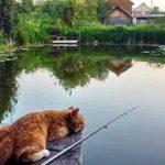 Здесь рыба есть: где летом ждет удача?