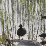 В латвийских реках и озерах вода прогрелась до +25 градусов