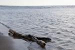 Из-за жары Балтийское море начали захватывать водоросли