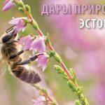 Школы могут получить журнал «Горизонты Эстонии 2020» бесплатно
