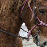 Спортсмена из ОАЭ дисквалифицировали на 20 лет за жестокое обращение с лошадьми