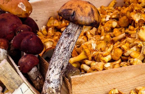 Миколог: ожидается хороший грибной сезон