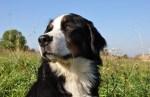 Приюты для животных предлагают посетителям прогулки с собаками